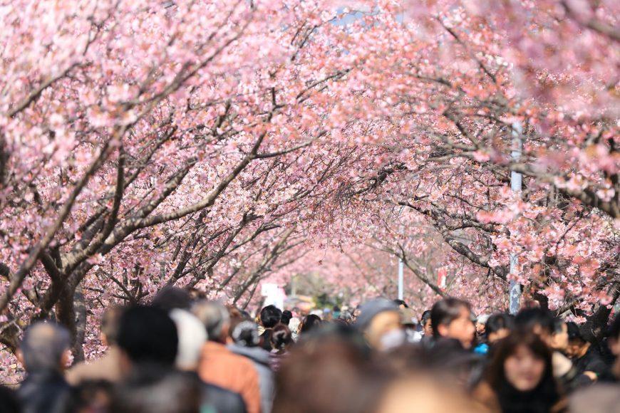 Trois endroits où tout amateur de fleurs (ou de beauté!) devrait aller au moins une fois dans sa vie